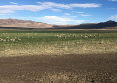 The Triple Benefit Of Feeding Sheep With Cover Crops. Winter, 2018.